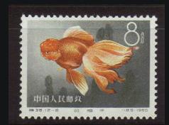 金魚シリーズ